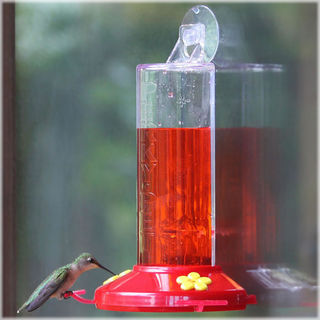 Hummingbird Suction Cup Feeder - 8oz